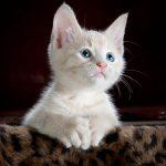 Waarom is een krabpaal nodig voor jouw kat